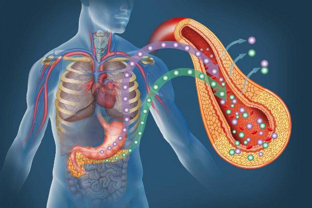 что делает инсулин в организме человека